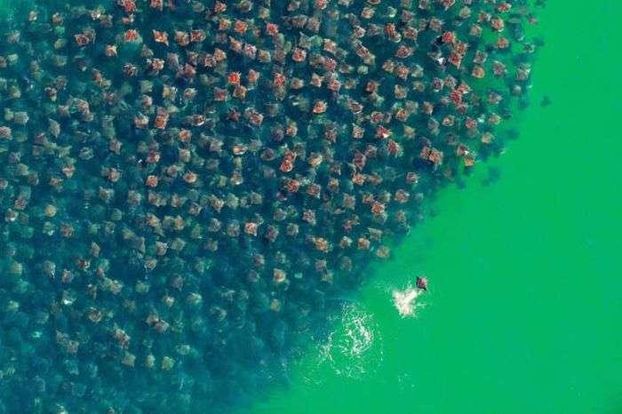 Кращі знімки природи за 2012 рік (фото 48)