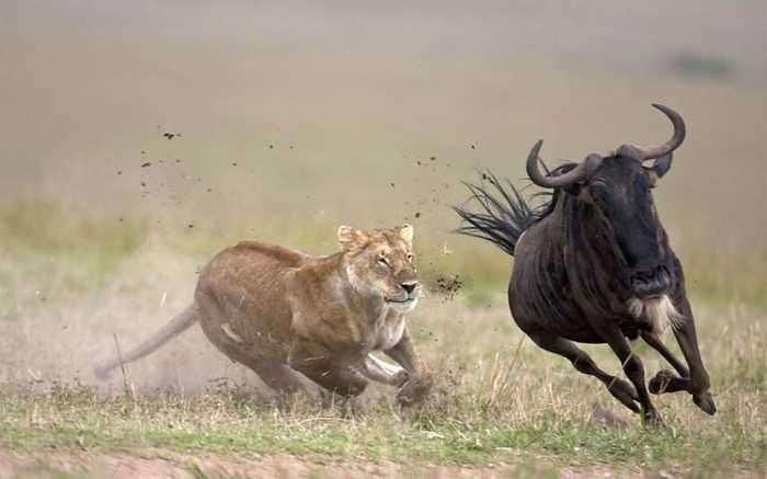 Фотографії спортсменів і тварини в таких же позах (28 фото)