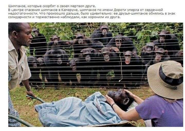 У тварин є душа (14 фото)
