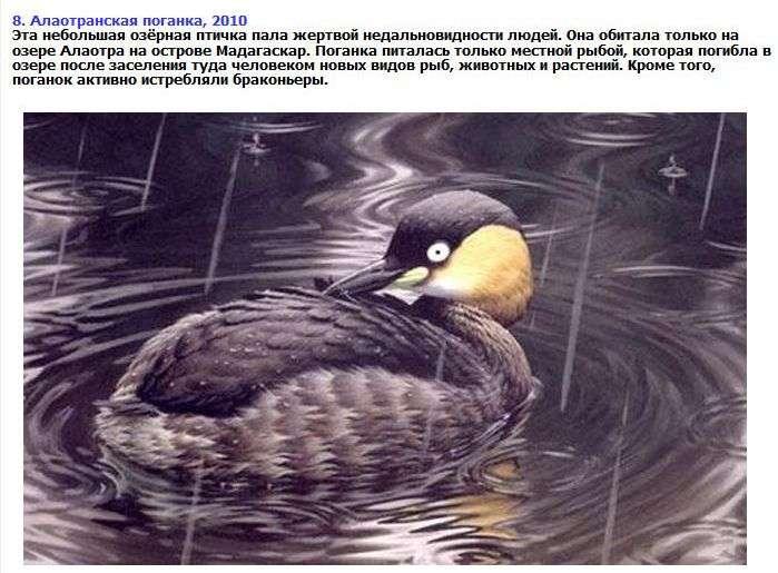 ТОП-8 видів тварин, яких ми більше не побачимо (9 фото + текст)