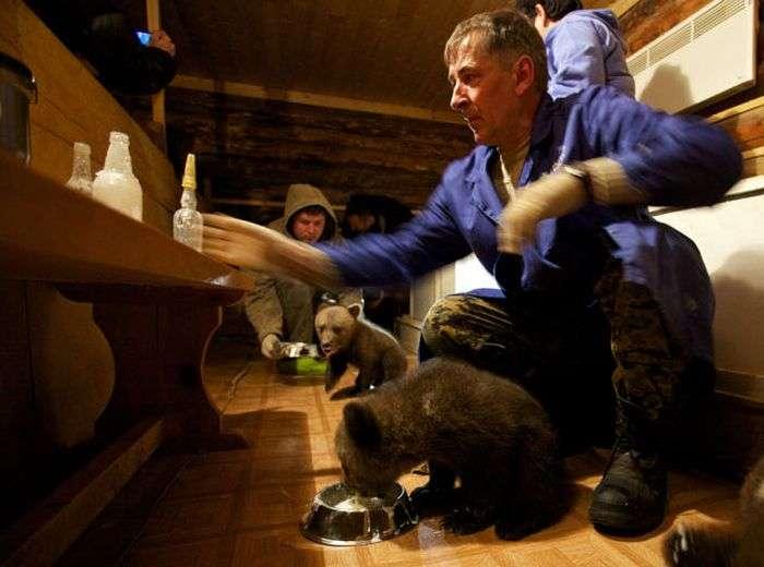 Колишній мисливець тепер рятує ведмедів (16 фото)