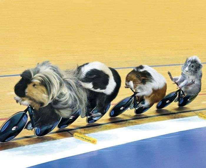 Смішний олімпійський календар (12 фото)
