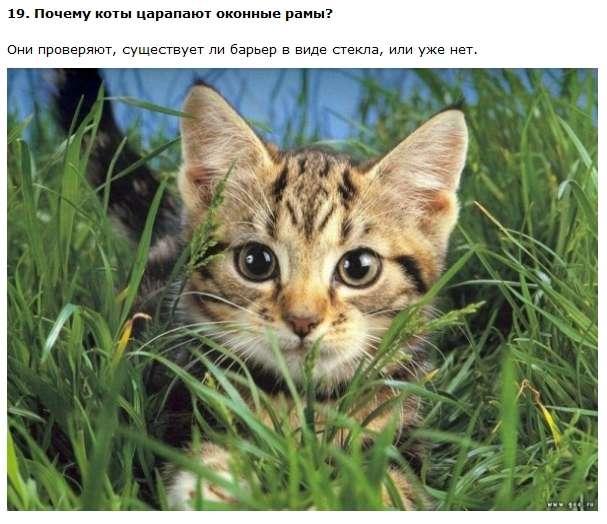 Цікаві і правдиві факти про котів (11 фото + текст)