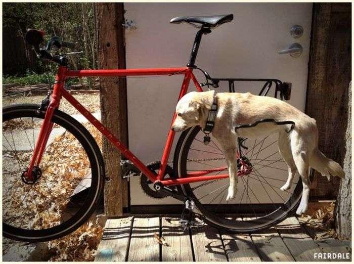 Багажник на велосипеді для собаки (4 фото)