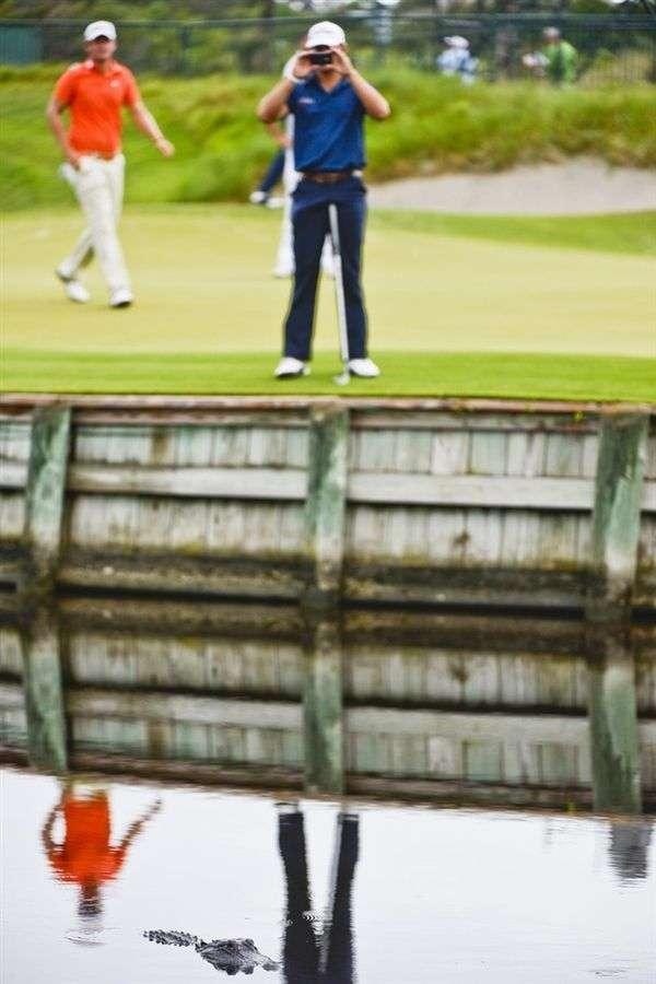 Гольф - небезпечний спорт (20 фото)
