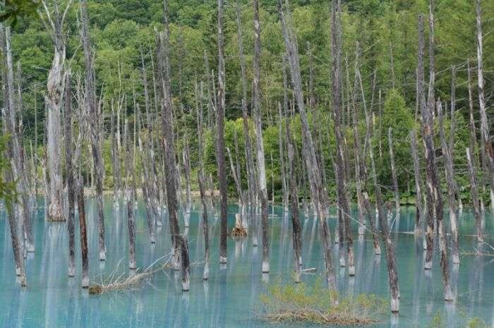 Дивовижний Синій ставок в Японії (37 фото)
