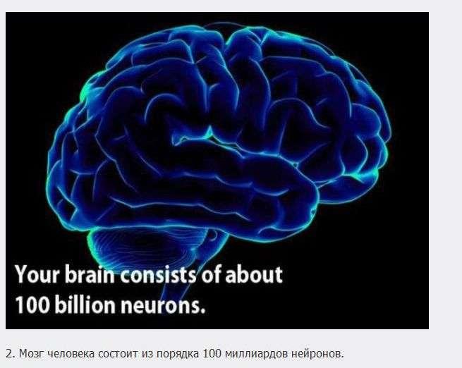 18 пізнавальних фактів про мозок (18 фото)