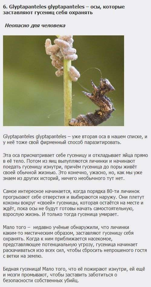 ТОП-10 самих хитромудрих паразитів (10 фото + текст)