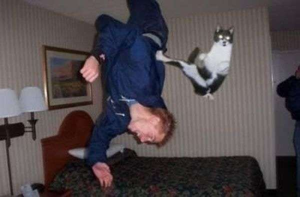 Знімки котів, зроблені в потрібний момент (32 фото)