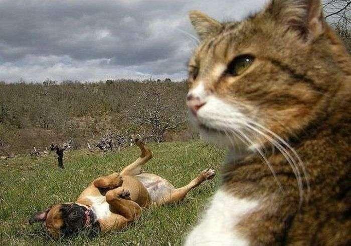 Фотобомбы з тваринами. Частина 21 (84 фото)