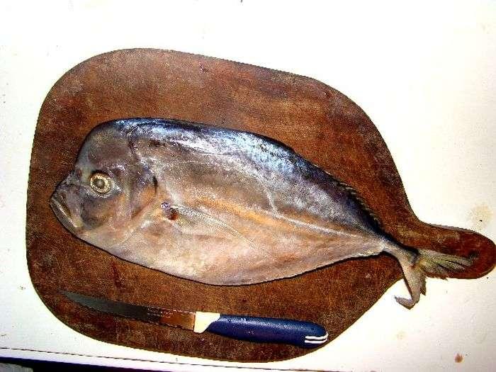 Шахрайство рибної промисловості (13 фото)