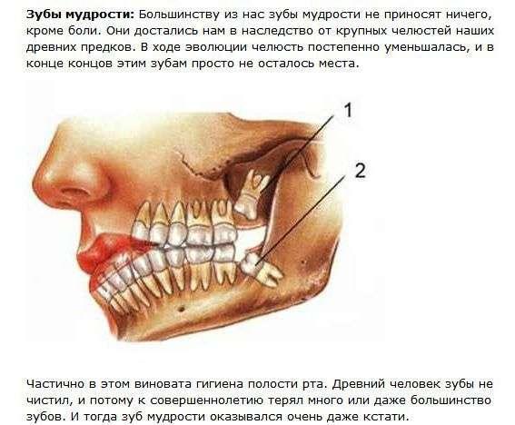 Даремні органи людського тіла (5 картинок + текст)