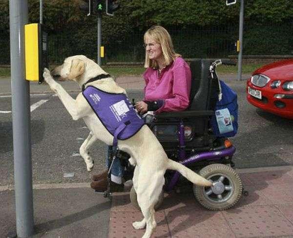 Унікальна спеціально навчений собака (8 фото)