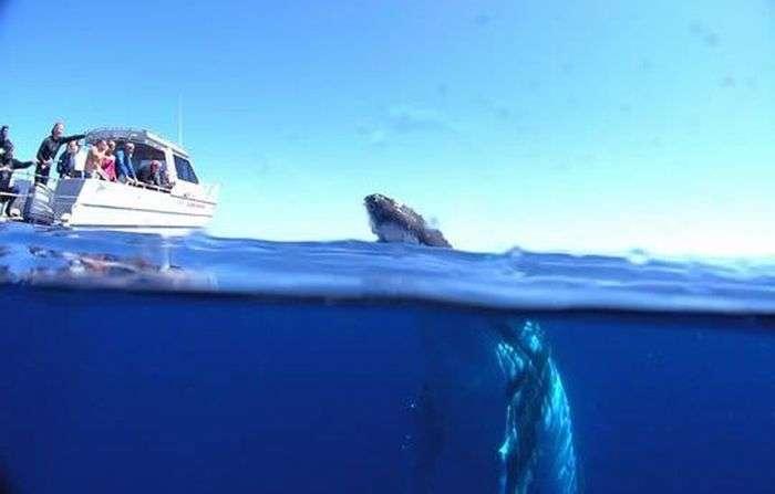 Дайвінг з китами (12 фото)