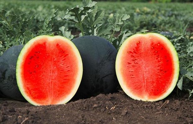 Самые дорогие фрукты в мире дорогие фрукты,интересное,фрукты