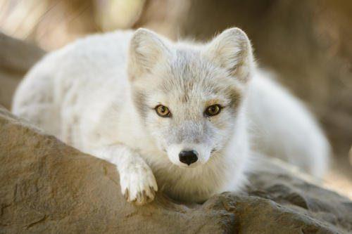 Животный мир Камчатки — список, описание и фото зверушки,живность,питомцы,Животные