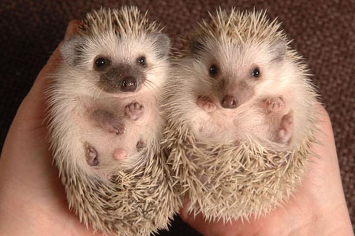 10+ фото малышей животных для заряда позитивом на весь день! Фото,pin,детёныш,животные,малыши