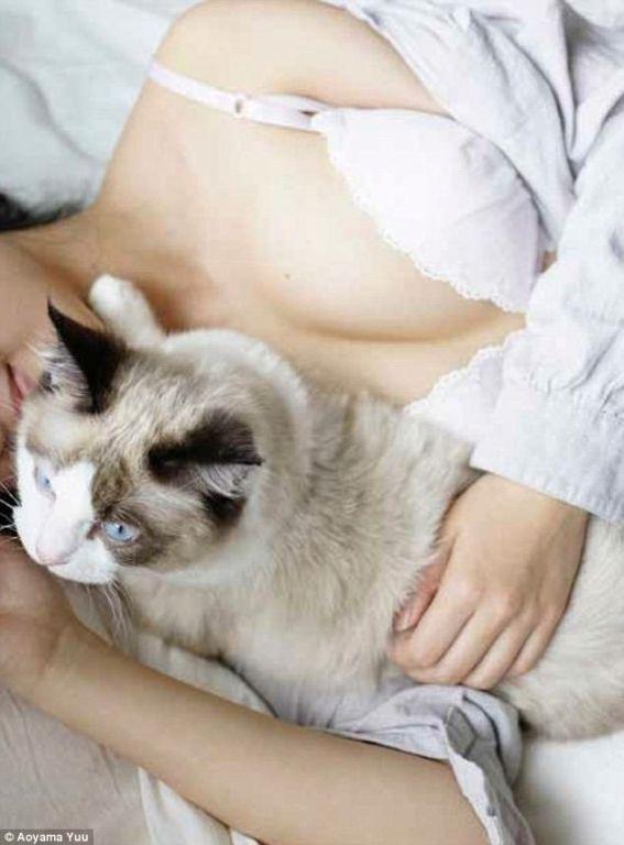 Котики и груди: умиротворяющий альбом от японского фотографа зверушки,живность,питомцы,Животные