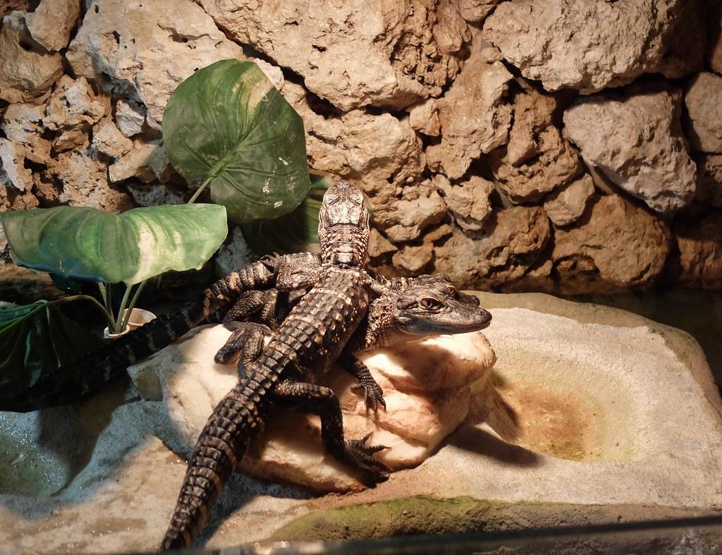 Майами. Крокодилы, пальмы...