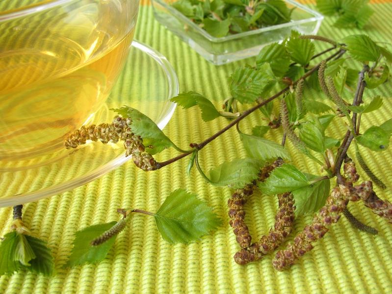 Чем полезны березовые листья Здоровье,Болезни,Лайфхаки,Медицина,Профилактика