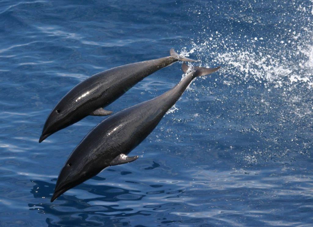 Китовидные дельфины зверушки,живность,питомцы,Животные