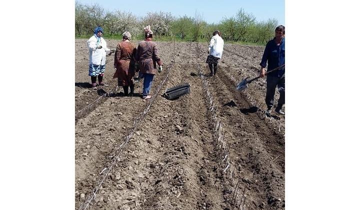 В Магарамкентском районе Дагестана идет закладка питомника плодовых культур события,Новости,сделано у нас