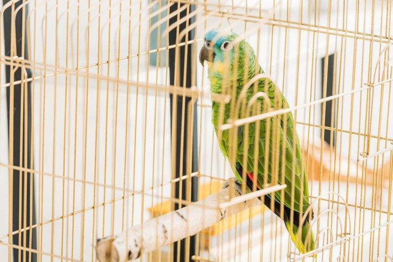 Попугаи действительно умеют разговаривать? Интересное