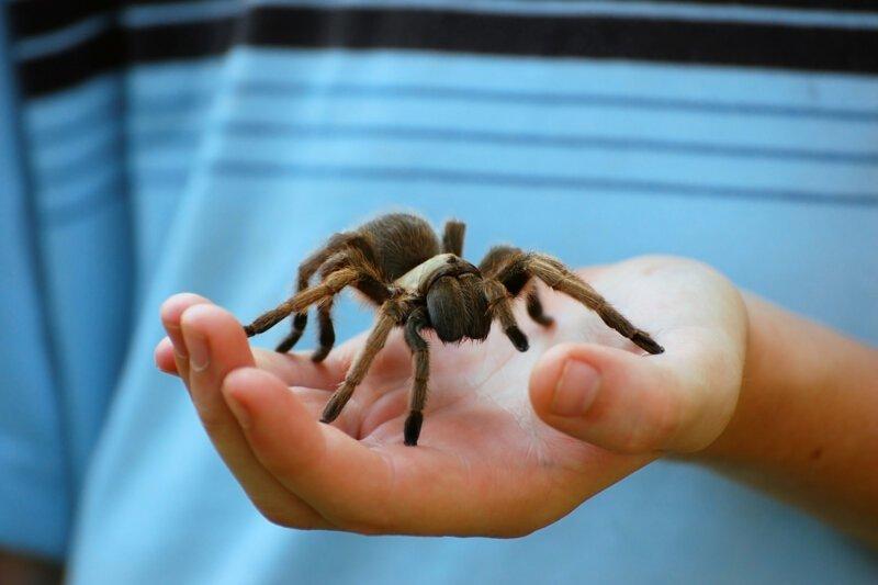 Зять решил избавиться от тёщи с помощью паука   Интересное