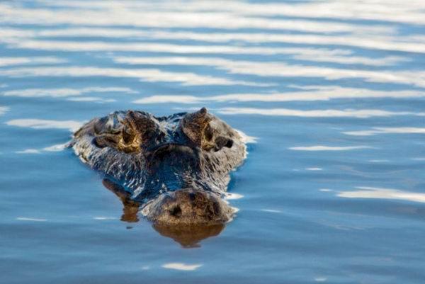 Примеры загадочного поведения животных Интересное