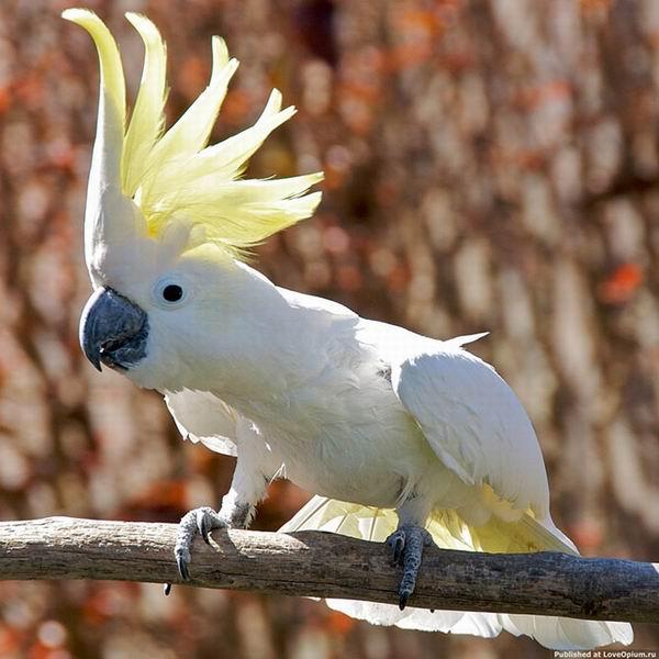 Птичьи рекорды Интересное