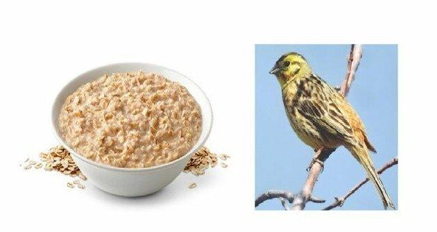 Овсянка на завтрак: так ли это полезно?   Интересное