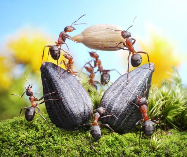 7 причин избавиться от муравьев в саду и огороде