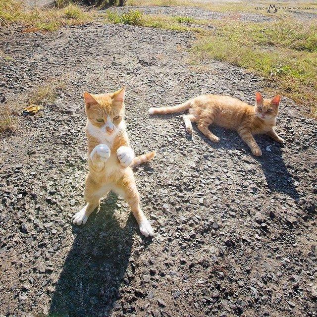 20 невероятно забавных кошек, которые поднимут даже самое мрачное настроение! животные