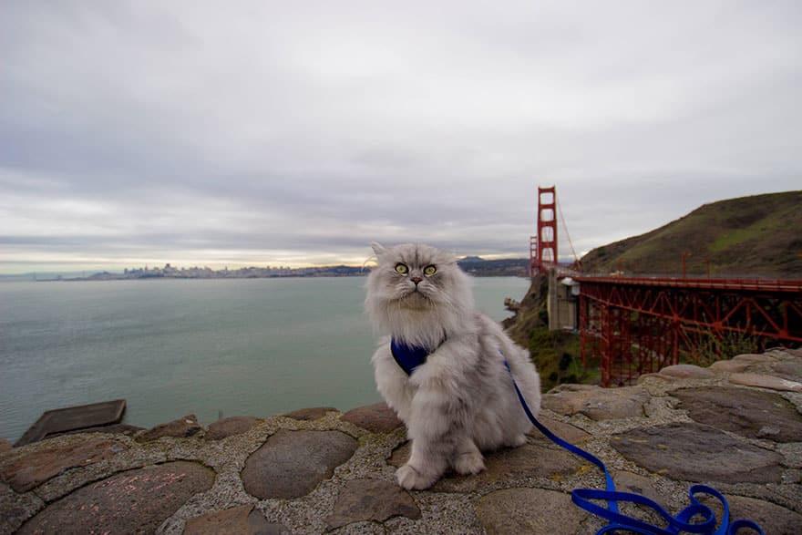 Самые дальние путешествия кошек домашние животные,интересное,кошки и коты,путешествия