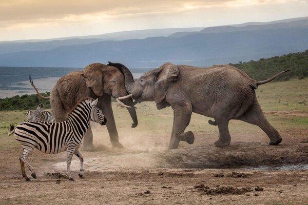 Африканский слон: Ядерная бомбардировка интересными фактами животные,интересное,природа,слоны