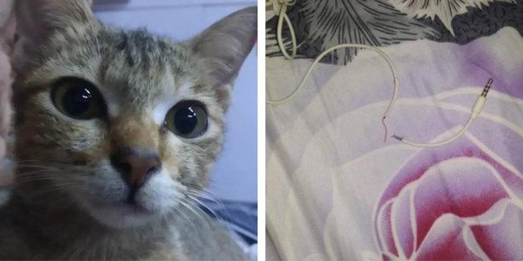 Кот сломал наушники и решил искупить вину необычным способом кошачьи истории,наши любимцы