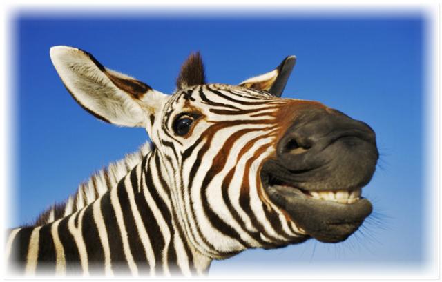 Улыбающиеся животные дарят минутку позитива людям не всё так грустно
