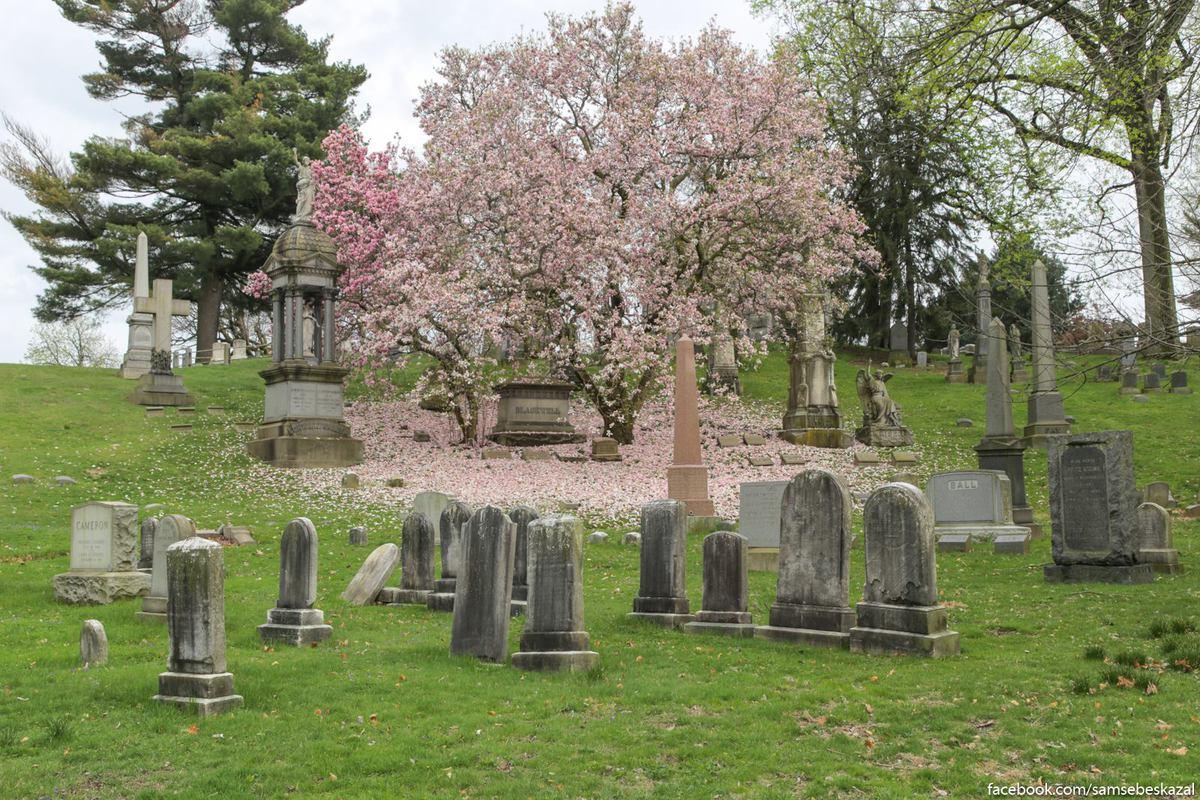 Какая умопомрачительная весна на Гринвудском кладбище