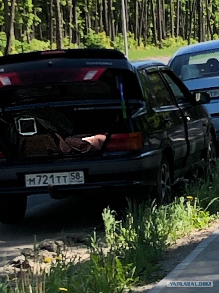 Ждите, дорогие автомобилисты! Вот так прячут камеры в Саранске авто и мото,автоновости,Россия