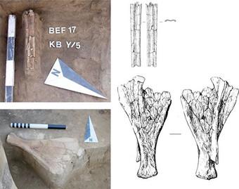 Физики вычислили время постройки «рыбзавода каменного века» из Сибири Археология